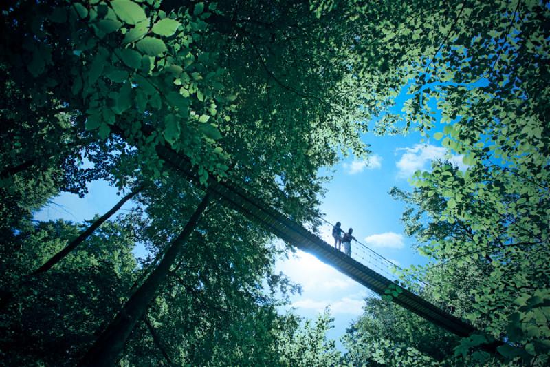 Hängebrücke Rothaarsteig